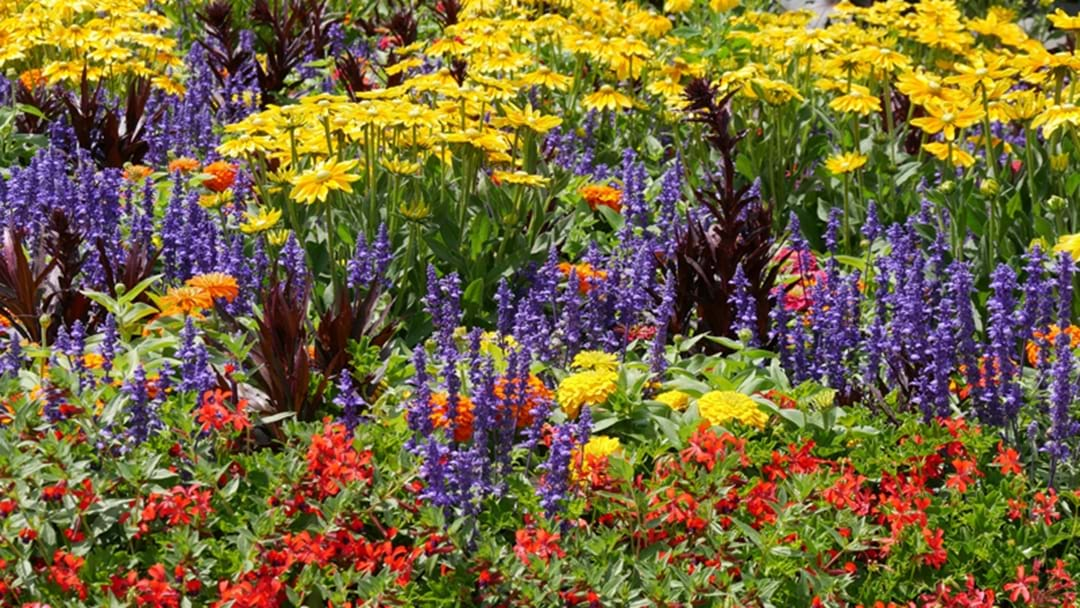 Sydney Is Giving Away Free Flowers And Plants This Weekend