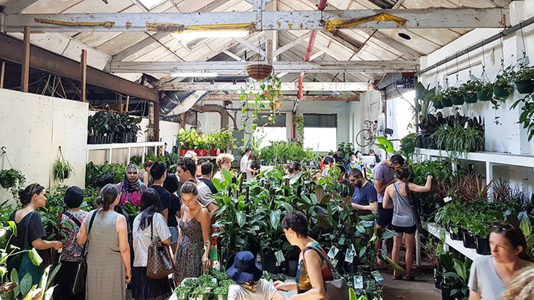 There Is Going To Be A Massive Indoor Plant Sale This Weekend