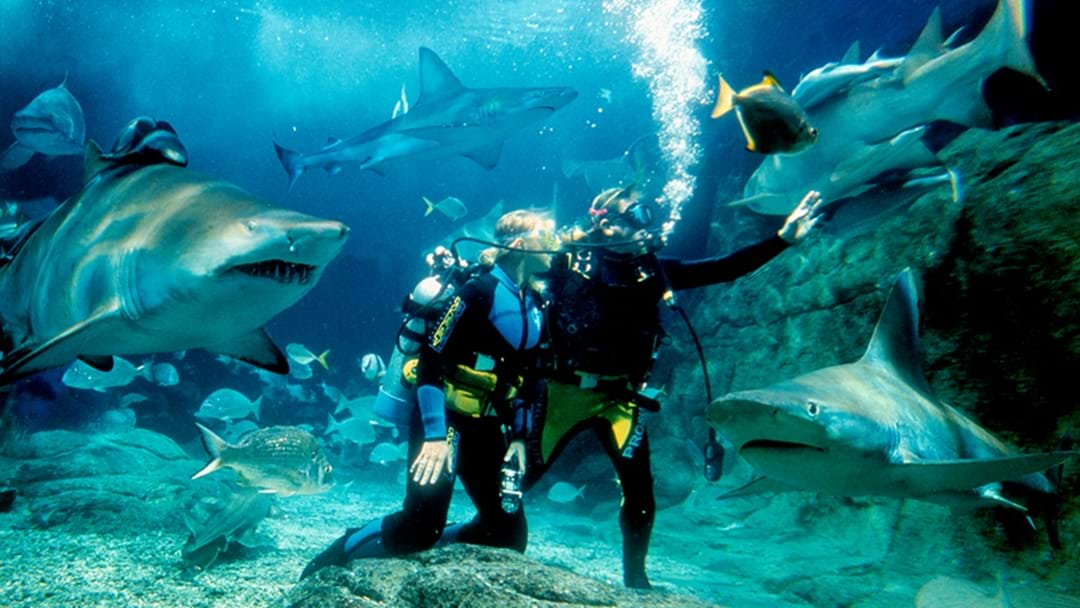 Sea Life Sydney Aquarium Has Launched An Extreme New Shark Dive Experience!