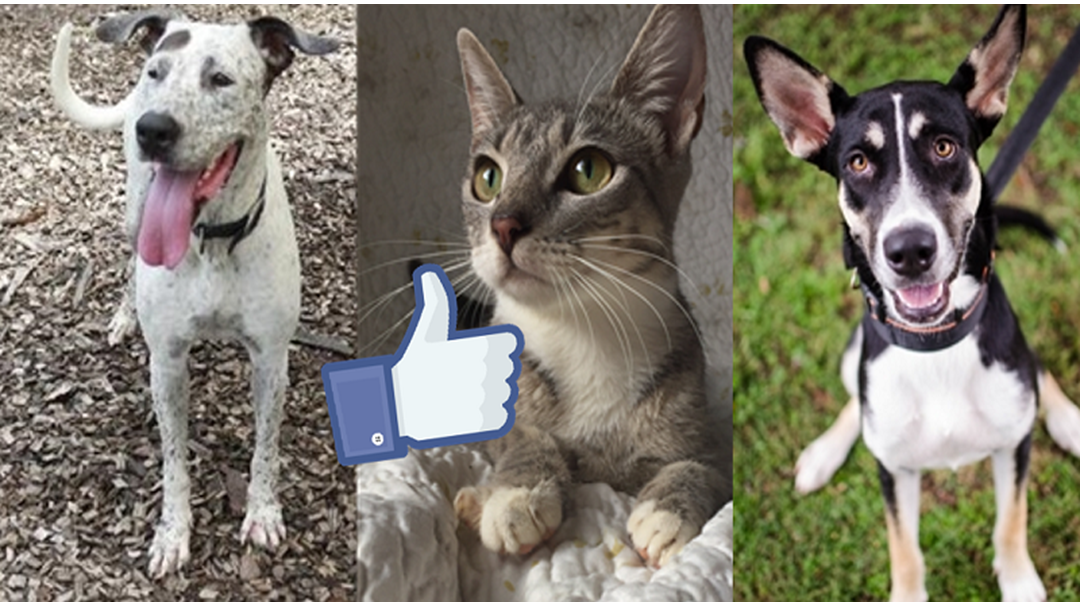 Buy Some Kitty Litter, These Townsville RSPCA Pets Are Ready For You