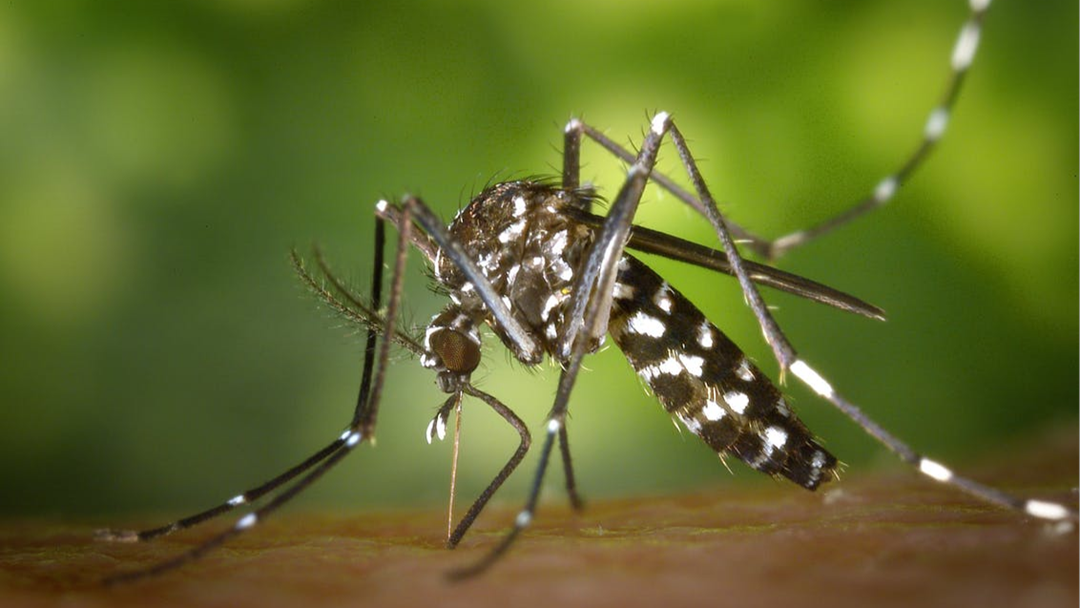Warning of increased risk in WA of mosquito-borne diseases
