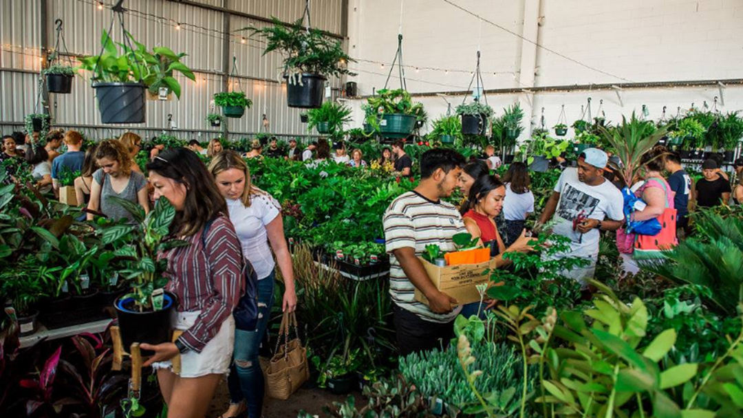 A Huge Indoor Plant Sale Is Coming To Adelaide