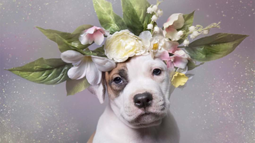 These Pitbulls In Flower Crowns Are Too Cute To Ignore