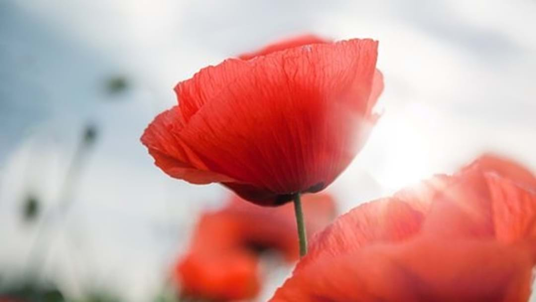 ANZAC Day Services Across the Western Downs