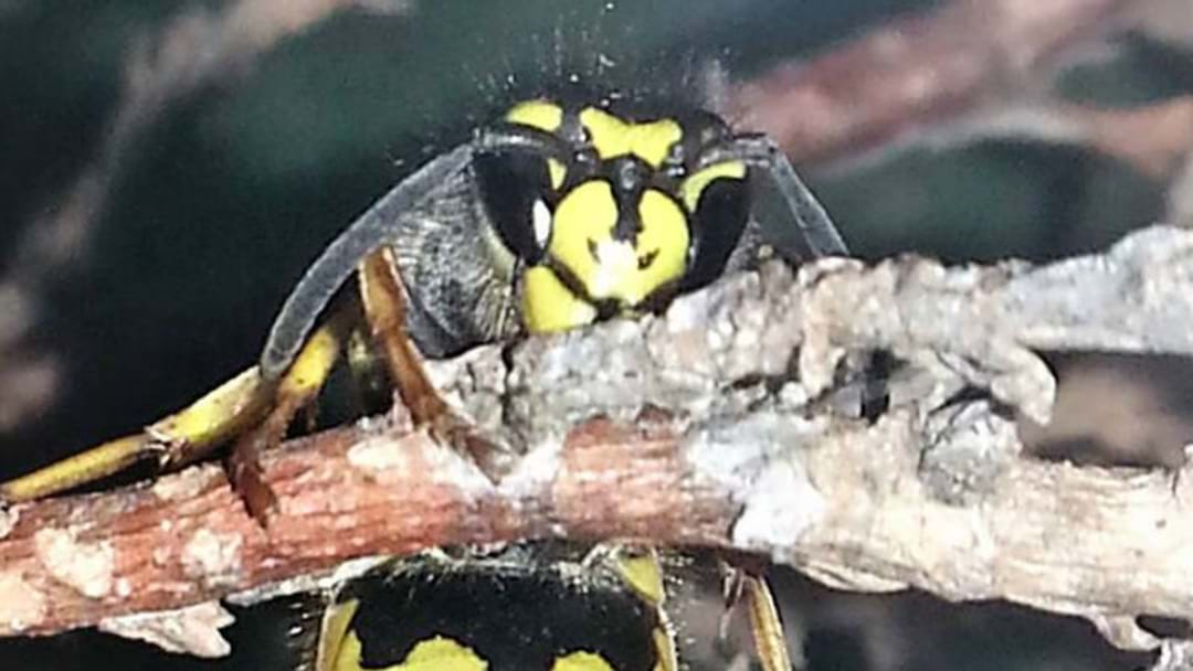 RECORD WASP SEASON FOR CANBERRA