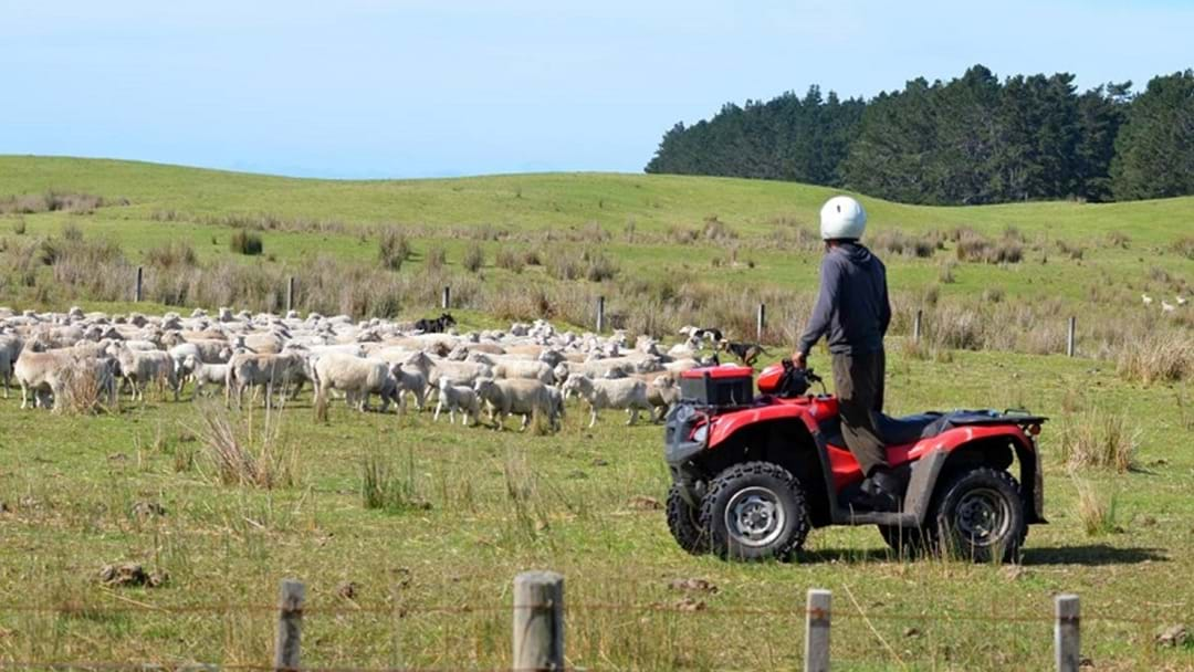 Quad Bike Safety Back On The Agenda