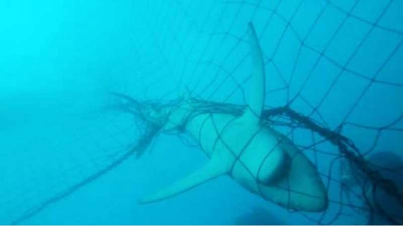 Article heading image for Shark Nets....Good Or Bad?