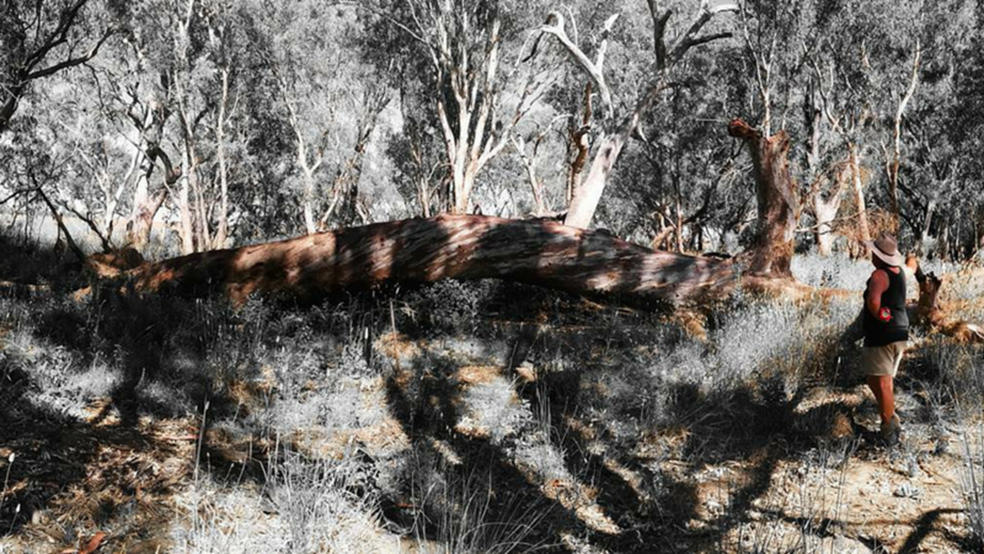 There's A Stack Of Red Gum Timber Available To Southern Riverina Community