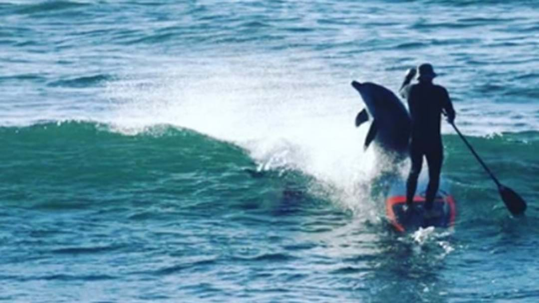 WATCH: Aussie Paddleboarder Body Slammed By Dolphin At Beach