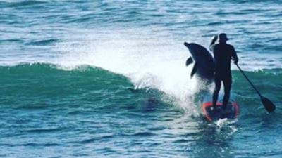 Aussie Paddleboarder Body Slammed By Dolphin At Beach