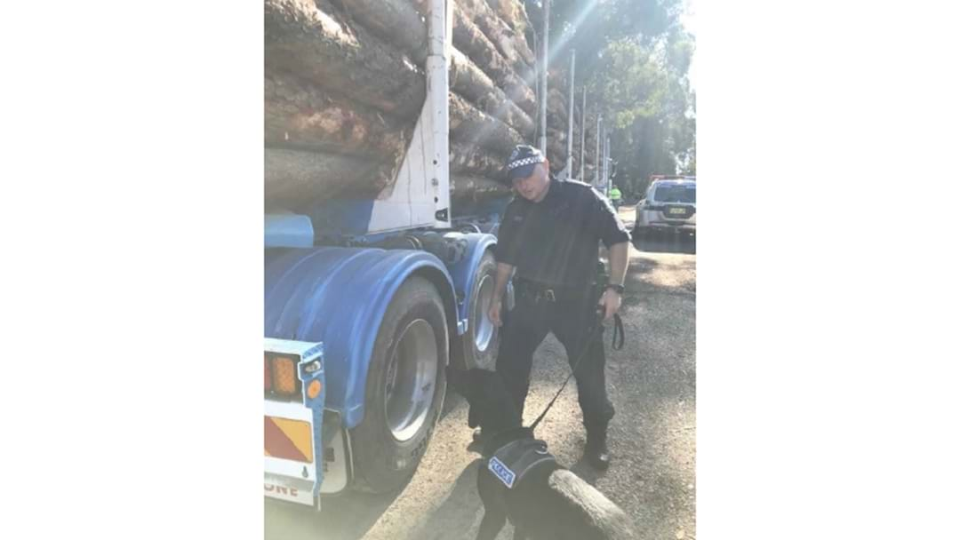 Logging trucks inspected during operation targeting drug supply