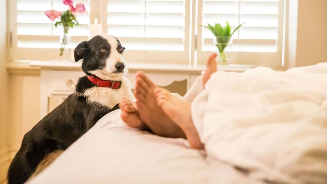 NEARLY HALF OF CANBERRANS WOULD PREFER A PET OVER A HOUSEMATE