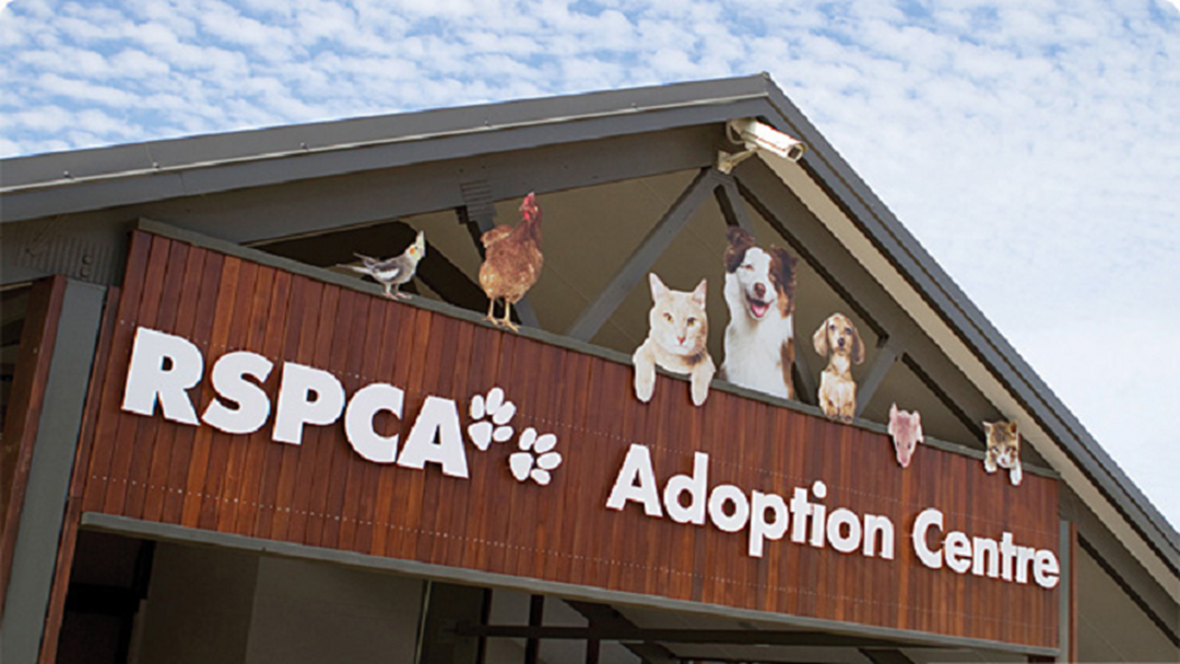 RSPCA Planning A More 'Retail' Presence In Townsville