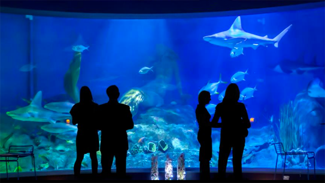 FINALLY: Sea Life Melbourne Are Doing ADULT NIGHTS!