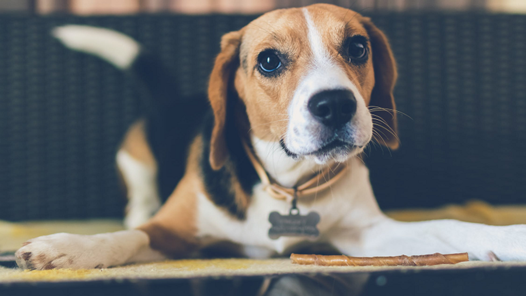 New Animal Rego System Coming For Townsville Pet Owners