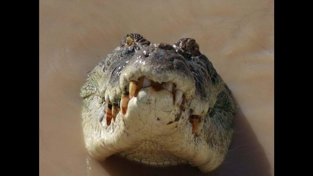 Does FNQ want a Croc Cull?