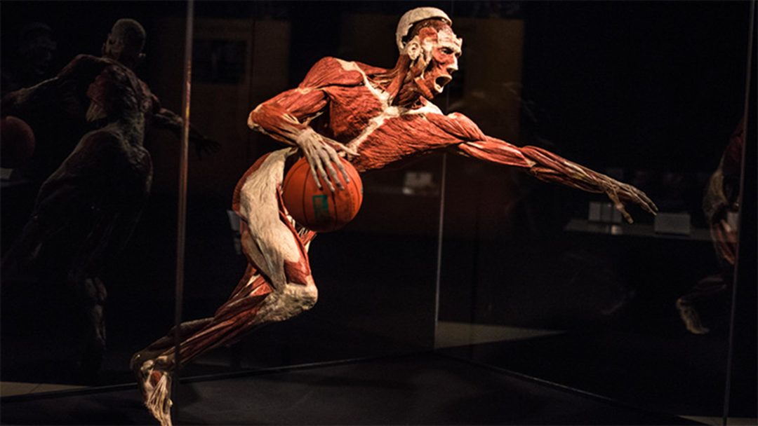 An Exhibition Featuring Real Human Bodies Is Coming To Melbourne