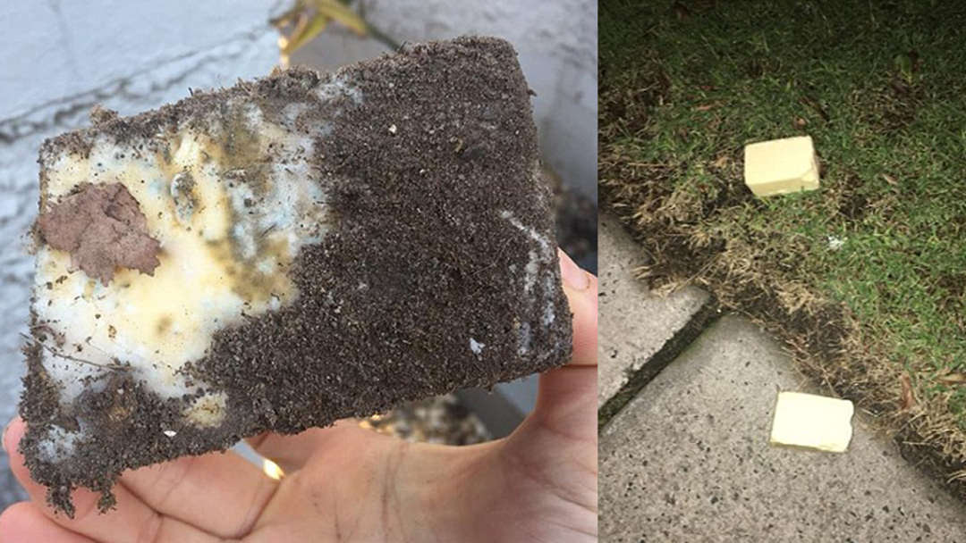 Melbourne Residents Are Finding Cheese In Their Pot Plants & No One Knows Why