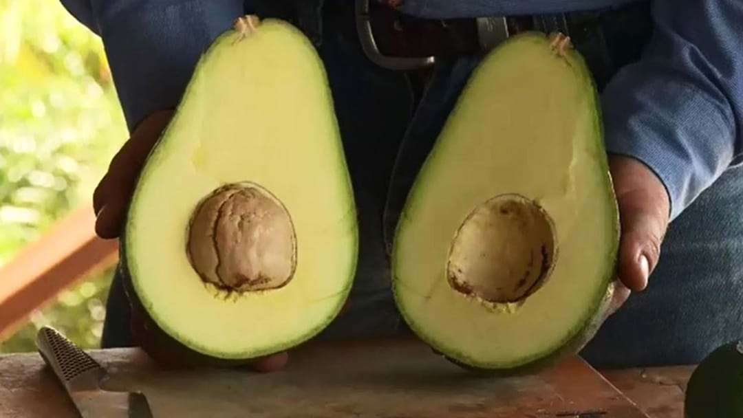 The World's Largest Avocado Has Landed In Australia