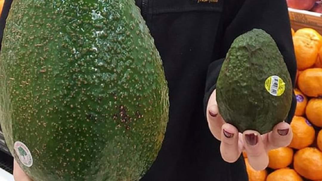 #AVOZILLA - Bodge Finds The Man Responsible For Giant Avocados