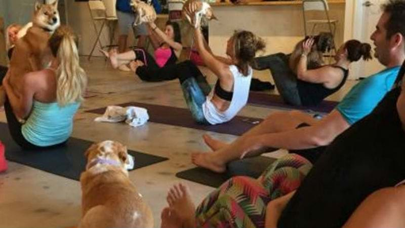 Article heading image for PUPPY YOGA PROVES POPULAR IN CANBERRA!