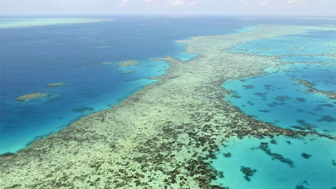 Great Barrier Reef Not Recovering As Well As Previous Years