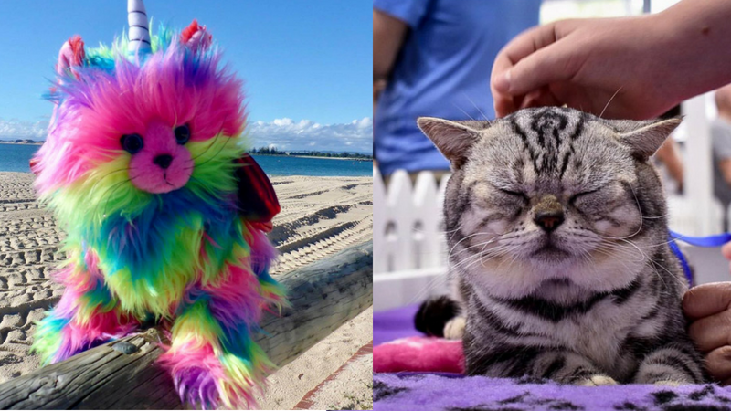Article heading image for We're Not Kitten... There's A Cat Carnival Coming To The Coast Next Weekend!