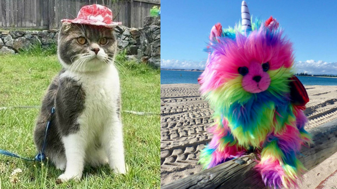 Cancel All Your Plans... There's a Cat Carnival On The Gold Coast This Weekend