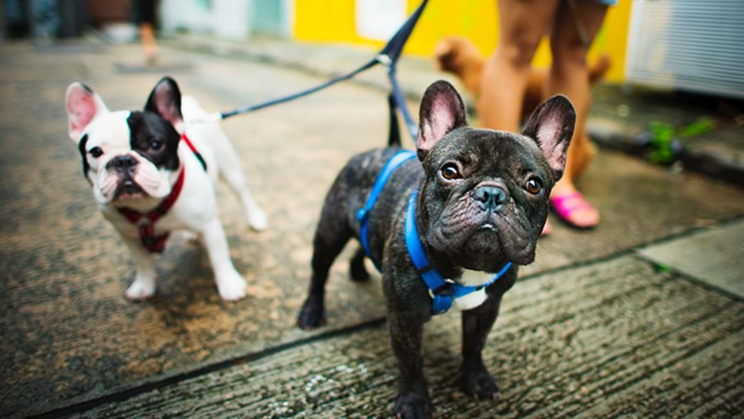 Should Dogs Be On Leads When Being Walked?