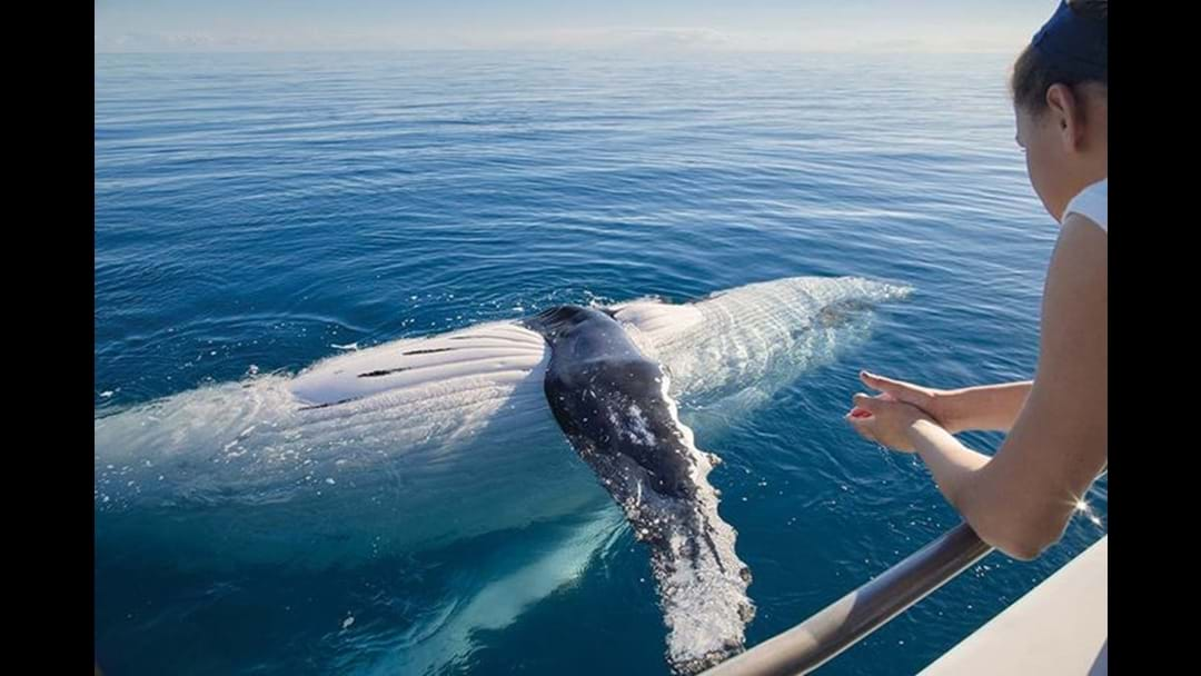 Win A Whale Watching Experience At Kingfisher Bay Resort