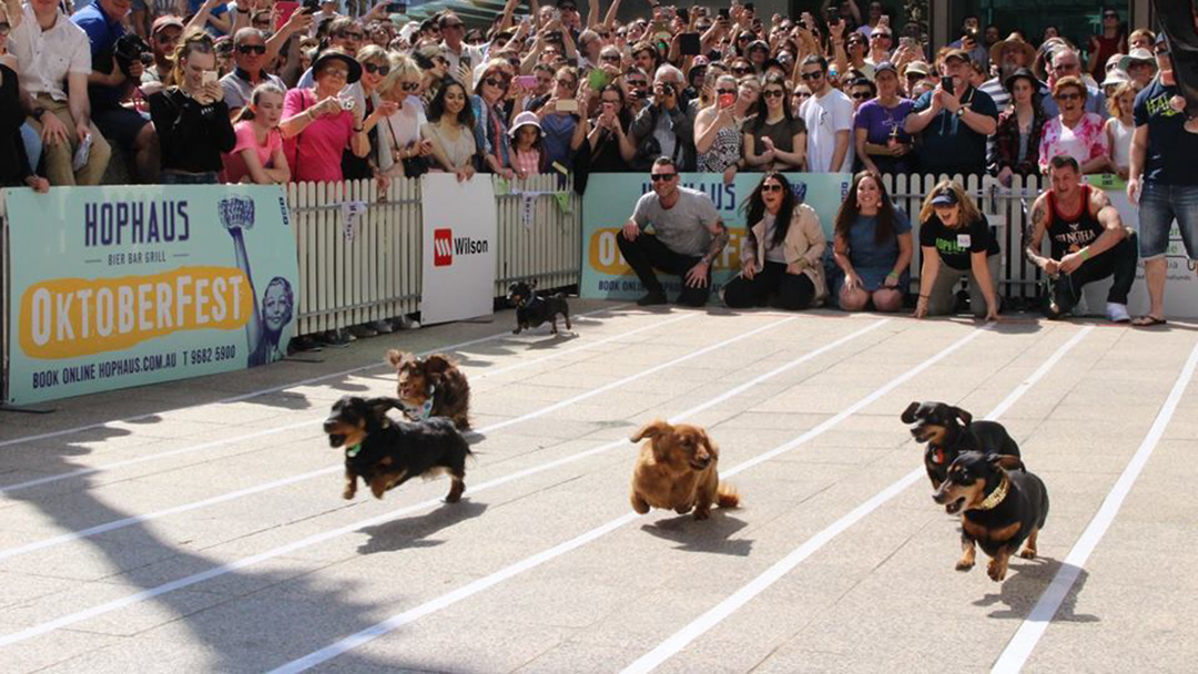 Hophaus' Sausage Dog Race Is Coming Back Soon & I'm Already Shaking With Excitement