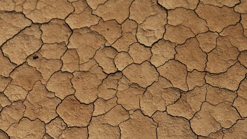 Article heading image for Army May Be Called In To Help Drought-Stricken Farmers