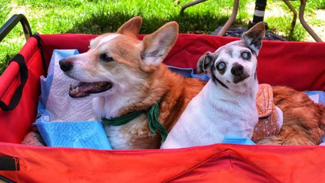 Retirement Homes For Dogs Exist & It Will Melt Your Heart