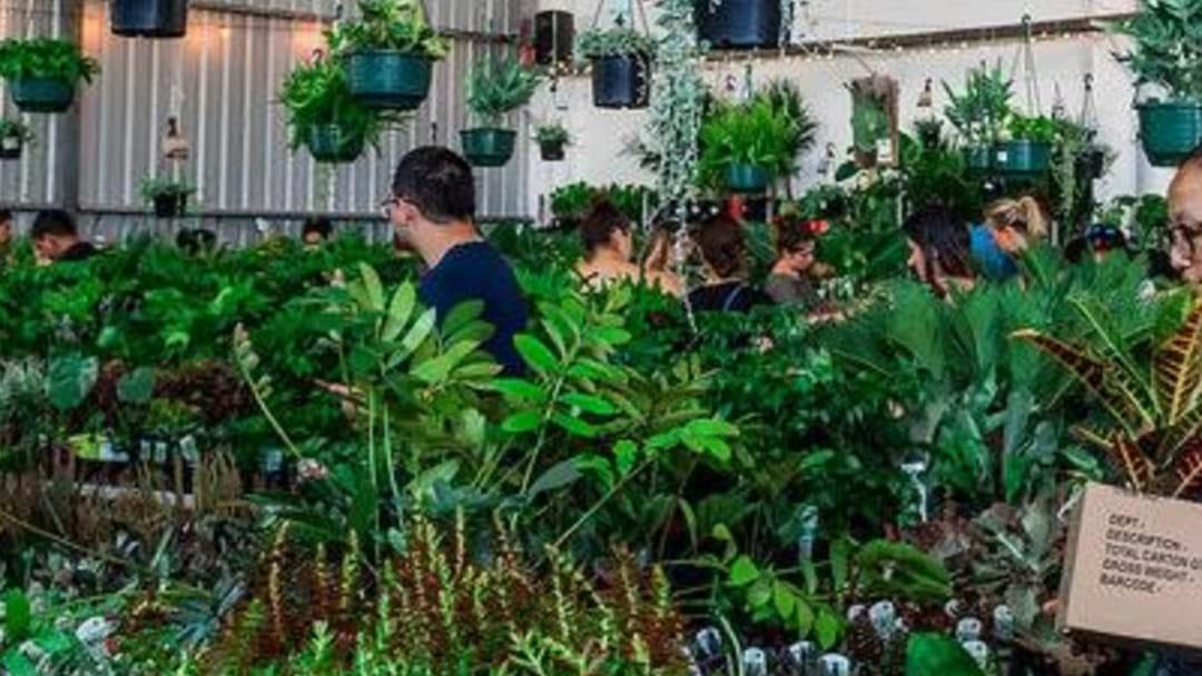 HUGE Indoor Plant Warehouse Sale In Sydney's Inner-West