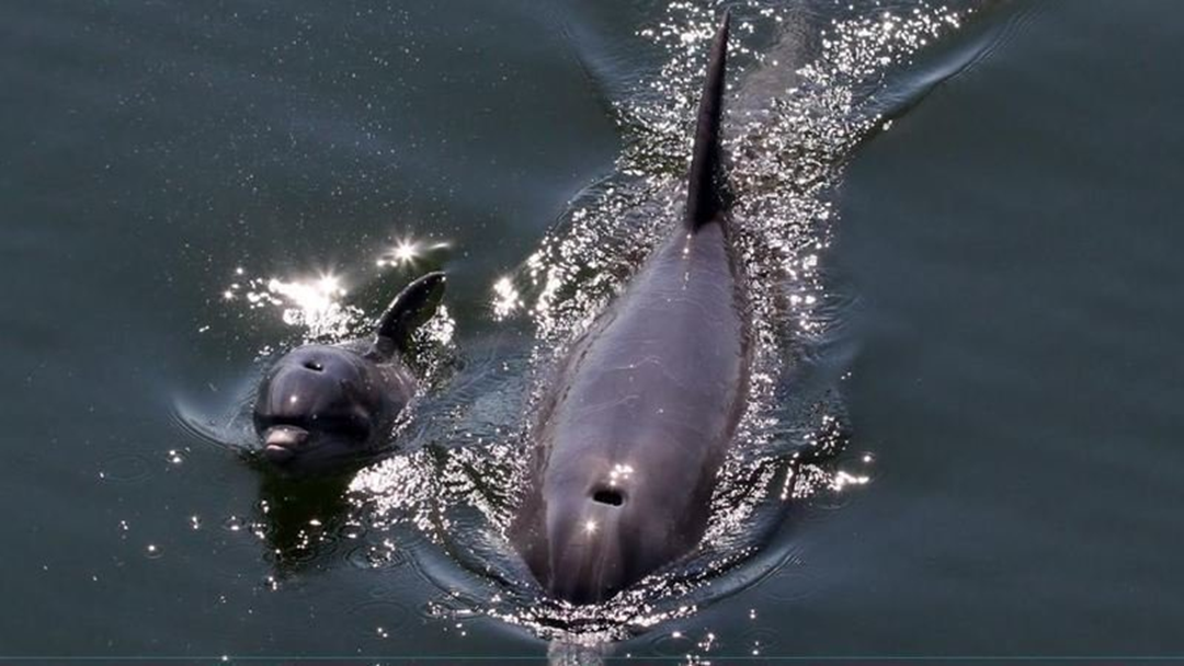 Port River Dolphins Being Killed By Speeding Boats