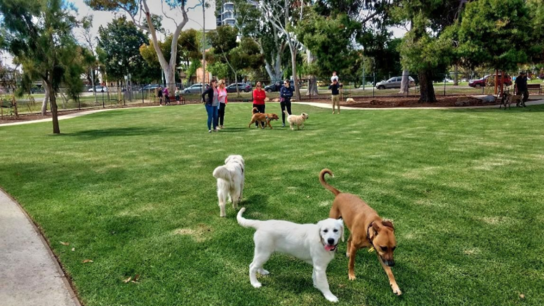 Eastern Suburbs Dog Park Put To Public Opinion