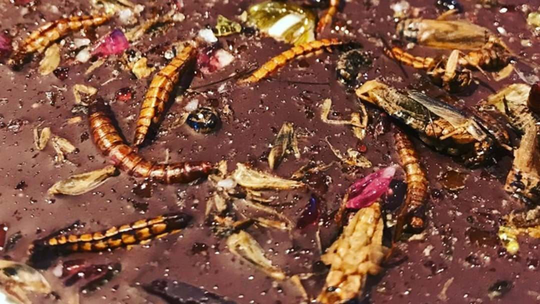 An Edible Bug Shop Has Popped Up In The Rocks
