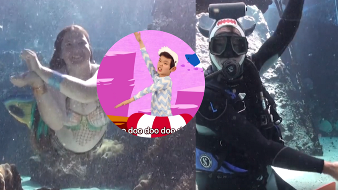 Reef HQ's Baby Shark Video Is Almost Better Than The Original