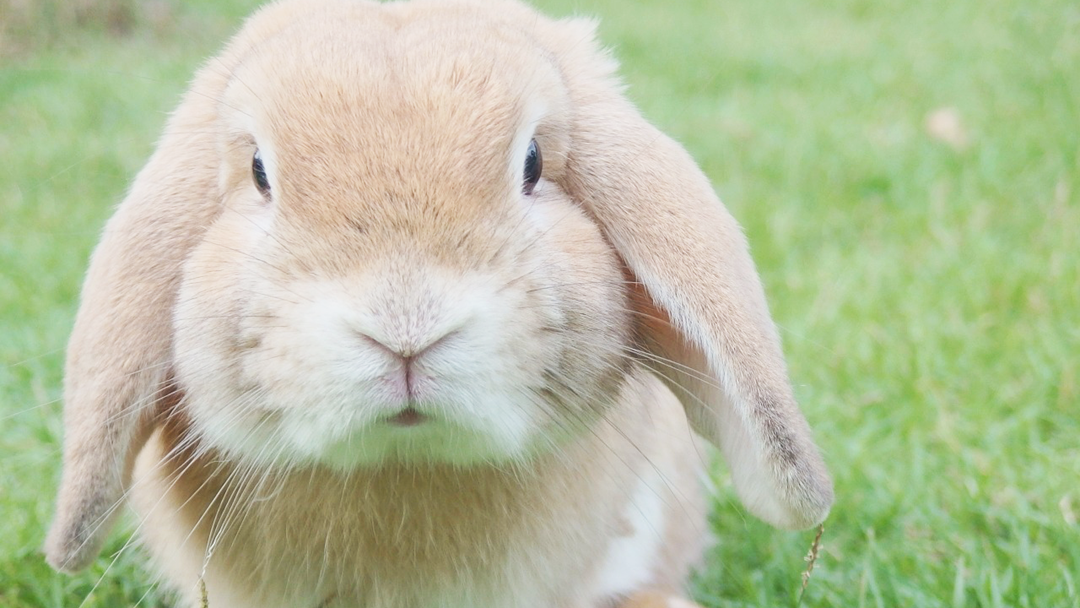 Here Are 8 Photos That Will Make You Want To Own A Rabbit