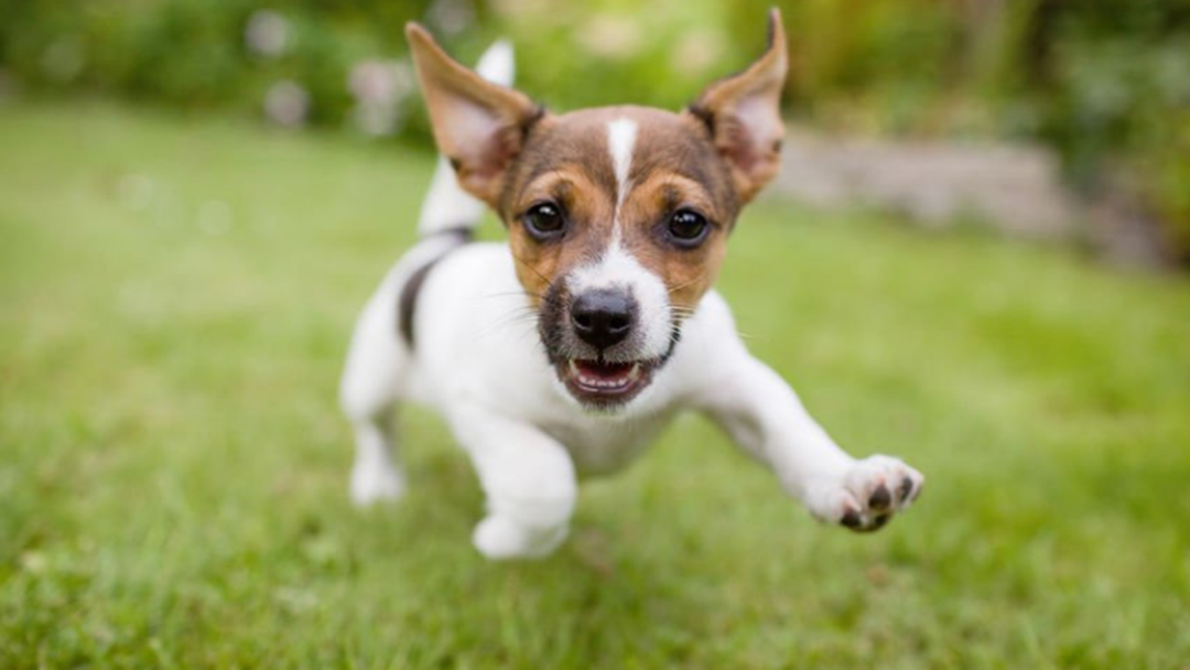 Keep Your Dog Happy And Healthy With These Great Vaccination Discounts