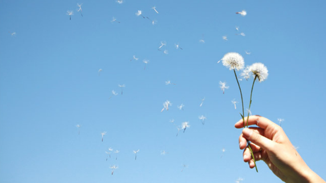The New Life Saving Tech This Allergy Season