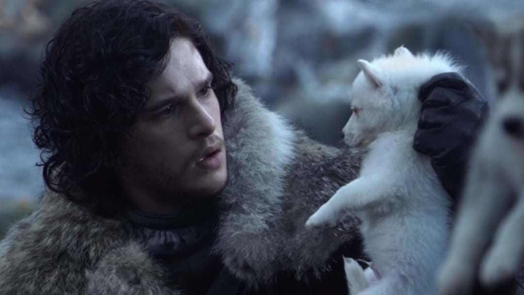 Your Fave Direwolf, Ghost, Is Returning For Season 8 Of Game Of Thrones!