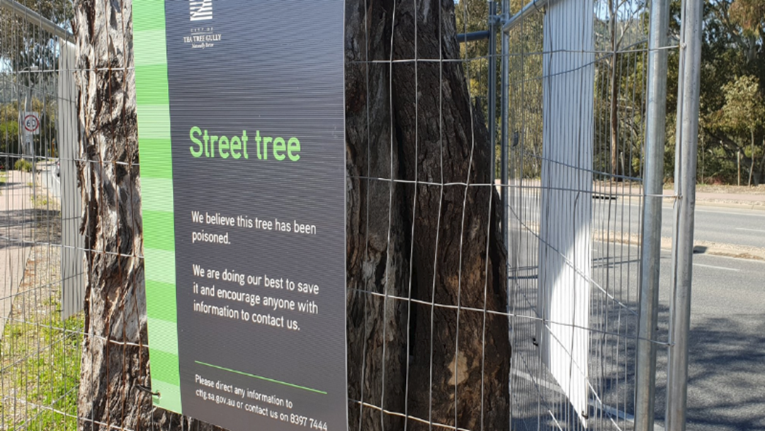 Tea Tree Gully Council Investigating Tree Poisoning