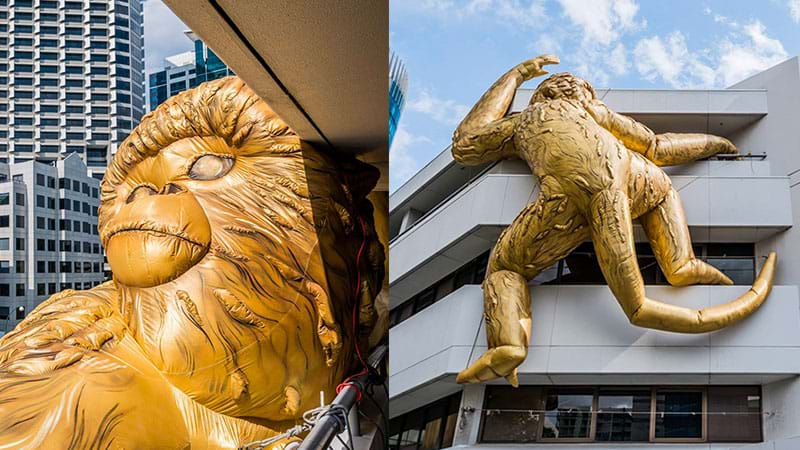 Article heading image for A Giant Golden Monkey Has Arrived In Perth!