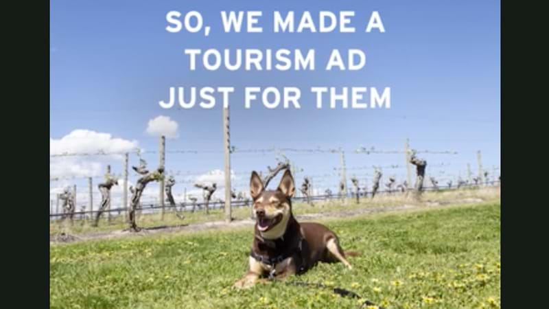 Article heading image for New Tourism Ad Launched...For Dogs