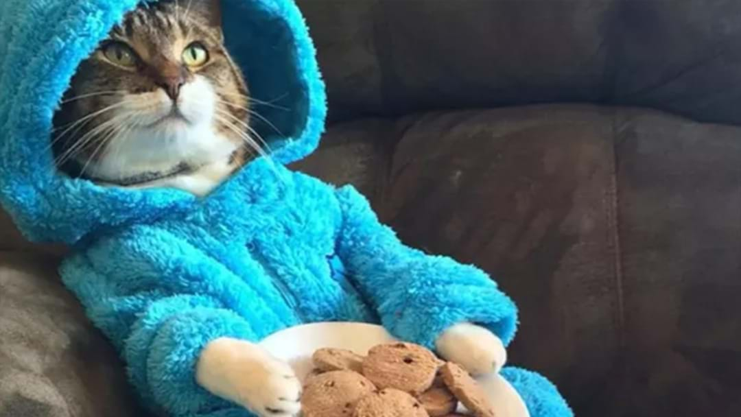 US Embassy Apologies For Cat Pyjama Party Invitation