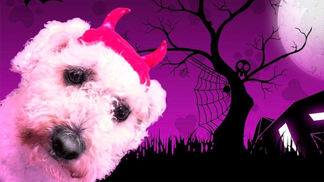 A Free Halloween Party For Your Dog Is Happening In Perth