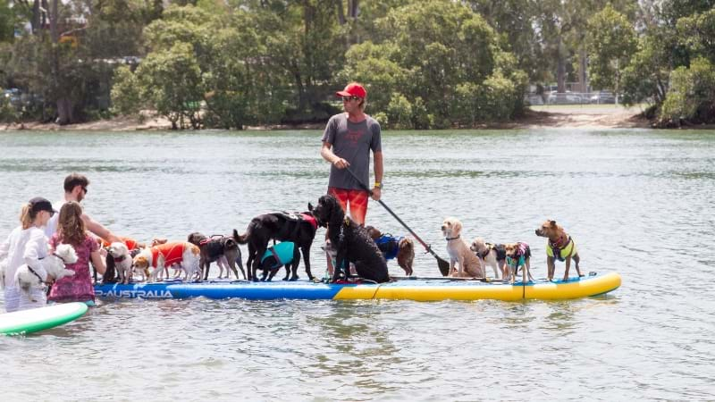 Article heading image for Pups On SUPS Returns To The Gold Coast This Month!