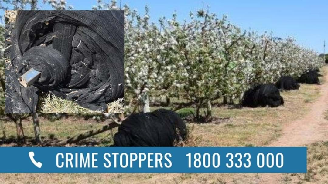 There's Been A HUGE Orchard Theft In Shepparton East