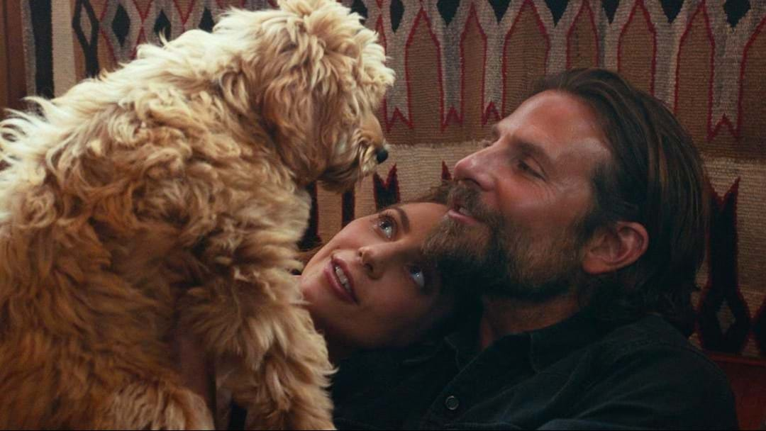 There Is A Confusing Dog Related Plot Hole At The End Of 'A Star Is Born'